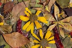 自然在秋天 库存照片