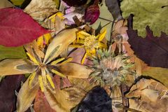 自然在秋天 库存图片