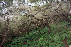 自然在直布罗陀 库存照片