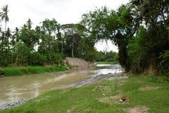 自然在Bulatukan河岸, Kapoc, Matanao,南达沃省,菲律宾的增长的森林植物群落 免版税库存照片