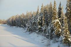 自然在Hanty-Mansiysk Okrug 免版税库存图片