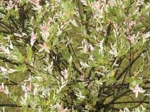 自然在Transcarpatia 免版税库存图片