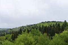 自然在Tustan 免版税库存图片
