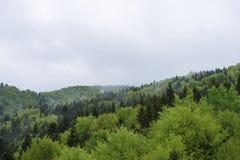 自然在Tustan 库存照片