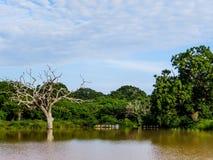 自然在Yala国家公园 免版税库存图片
