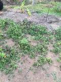 自然地方在斯里兰卡 免版税图库摄影