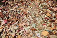 自然地板的颜色 免版税库存照片