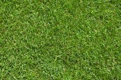 自然域新鲜的草的草坪 免版税库存图片
