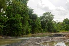 自然增长的植物在Bulatukan河,新的Clarin, Bansalan,南达沃省,菲律宾 库存图片
