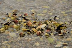 自然壳 图库摄影