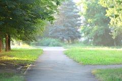 自然夏天绿色树 免版税图库摄影