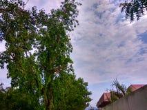 自然多云天空 库存图片