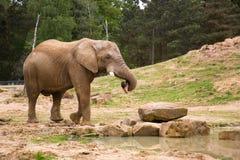 自然大象的环境 免版税库存图片