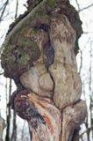 自然奇迹 免版税库存图片