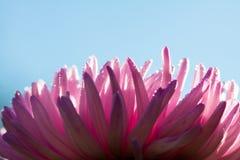 自然宏观花卉背景 库存照片