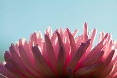 自然宏观花卉背景 免版税库存照片