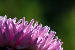 自然宏观花卉背景 图库摄影