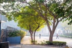 自然室外公园步行足迹 库存图片