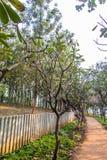 自然室外公园步行足迹 库存照片
