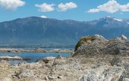 自然岩石秀丽在Kaikoura海滩的有山背景 免版税库存照片
