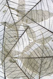 自然干叶子的宏指令 库存图片