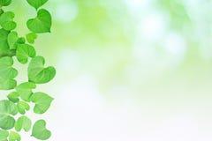 自然心形的绿色叶子,软的焦点模糊的背景 库存图片