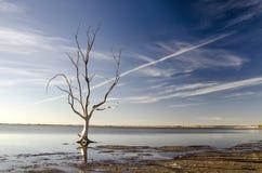 自然惊人的场面与偏僻的干燥树水槽的在水,雾的湖在早晨 免版税库存图片