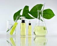 自然护肤美容品、自然有机植物学提取和科学玻璃器皿 图库摄影