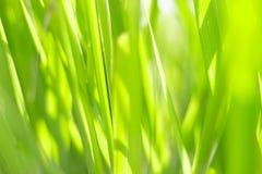 自然抽象春天背景 免版税库存照片
