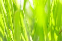 自然抽象春天背景 免版税图库摄影