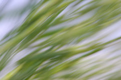 自然抽象的背景 免版税图库摄影