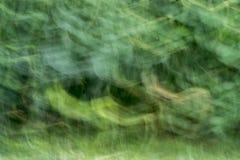 自然抽象草背景 免版税图库摄影
