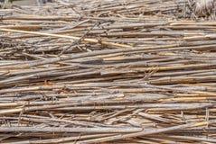 自然抽象镶边背景,干燥芦苇的纹理,干草,干茎 免版税库存图片