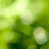 自然抽象backgound的绿色 免版税库存照片