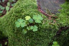 自然接近在森林里 免版税库存照片