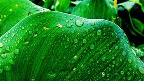 自然摄影 图库摄影