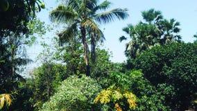 自然摄影 免版税库存图片