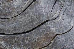 自然摘要–自然地被风化的木头 免版税库存照片
