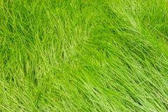 自然摘要有绿草背景 库存照片