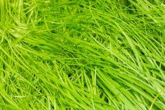 自然摘要有绿草背景 免版税库存照片