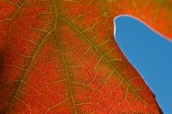 自然摘要-一片死的叶子的细胞和静脉 库存照片