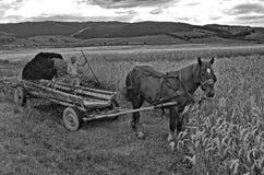 自然施肥 免版税库存图片