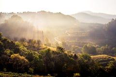 自然旅行概念:树山层数的有薄雾的夏天  库存图片