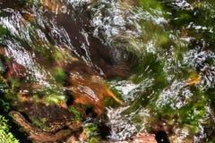自然旋涡 免版税图库摄影