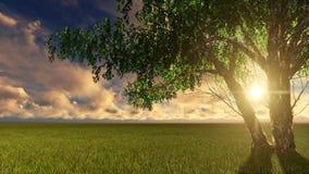 自然日落场面在树之间的太阳亮光 库存图片