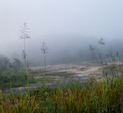 自然早晨薄雾 库存照片