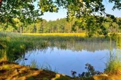 自然早晨风景  库存照片