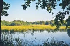 自然早晨风景  免版税库存照片