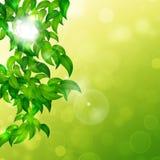 自然明亮的背景 免版税库存图片