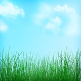自然春天背景 背景草查出的白色 夏天 田园诗 向量例证